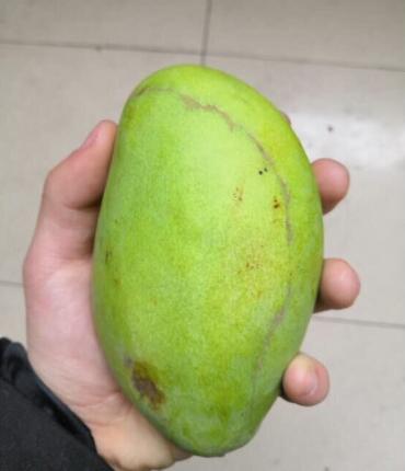 京东免费种树领水果是真的吗?我真的收到快递了