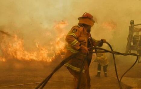 澳大利亚火为何还不停?动物死伤无数…