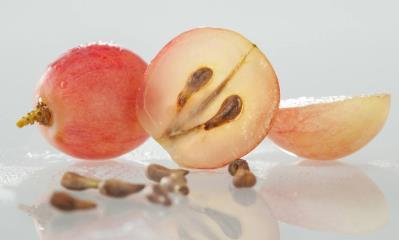 坚持吃葡萄籽10年了,吃葡萄籽到底有啥好处?
